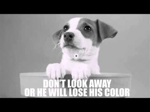 optical illusion dog blowing mind