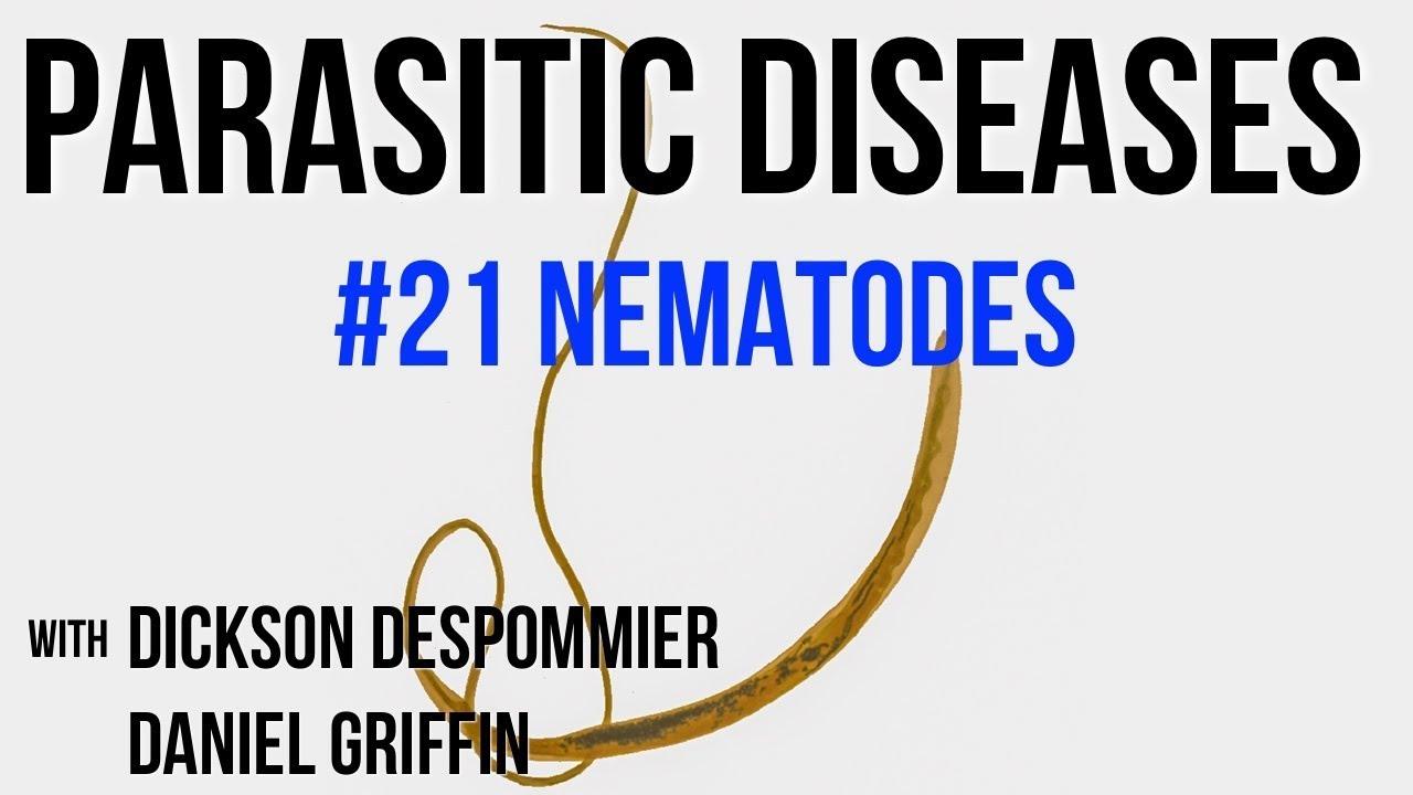 Căi de infecție cu nematode, Ascaris – Anticorpi