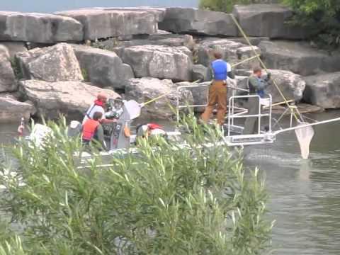 Electrofishing Credit River Lake Ontario Canada TRCA Boat
