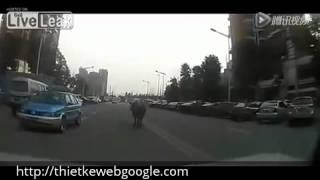 Trâu điên xuất hiện gây náo loạn đường phố