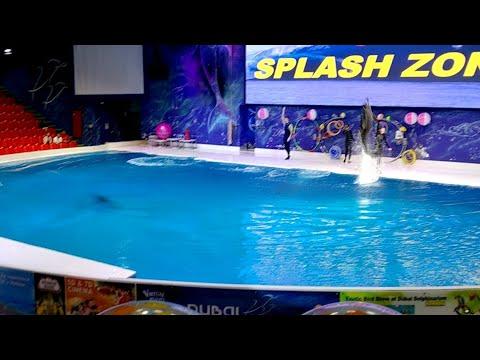Dubai Dolphinarium – Dolphins Show – Live!