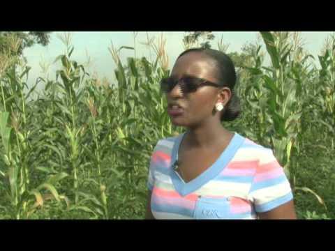 A Ugandan Small Scale Farmer