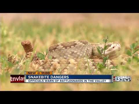 What you need to know for Las Vegas rattlesnake season