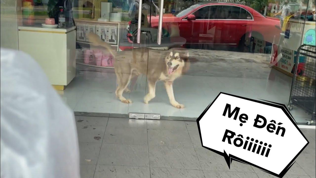 Thăm Mật Sau 10 Ngày Giãn Cách - Khổ Thân Ở Shop 1 Mình - Mật Pet Family