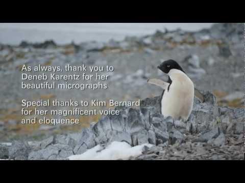 Spring on the Antarctic Peninsula