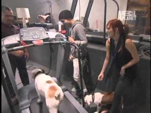 """Ashlee Simpson y Pete Wentz en """"El Encantador de Perros"""" (Dog Whisperer) Español Latino"""
