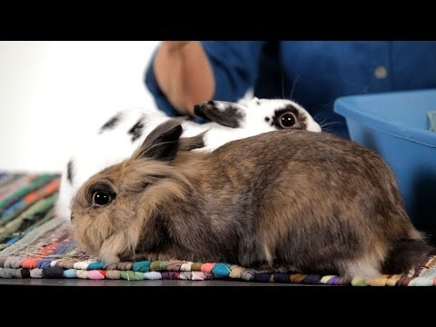 Why Are So Many Rabbits in Shelters? | Pet Rabbits