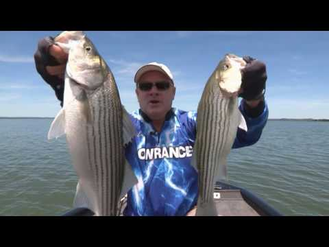 Barry Stokes Uses the Lowrance Elite Ti to find Fish in Brush