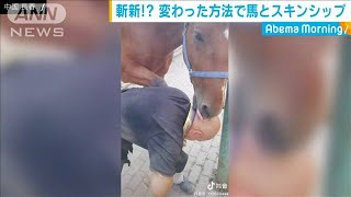 斬新!? 変わった方法で馬とスキンシップ 中国(19/11/27)