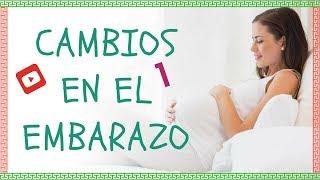 Cambios En El Embarazo (parte 1)
