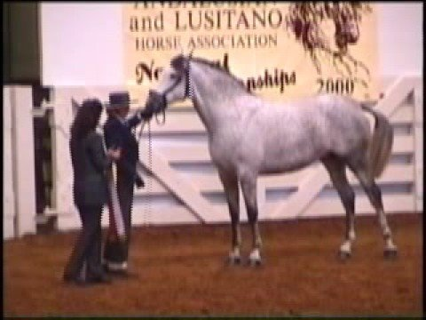 Spanish Vision Farm Pure Spanish Andalusian Horses For Sale
