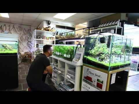 Aquarium Gardens PFK shoptour