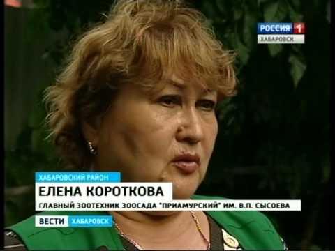 Вести-Хабаровск. В зоосаде