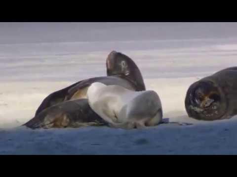 Wildlife In Hd Windows 7 Sample Videos