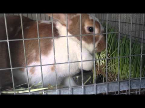 rabbit-birth---a-video-diary-of-kindling-complications