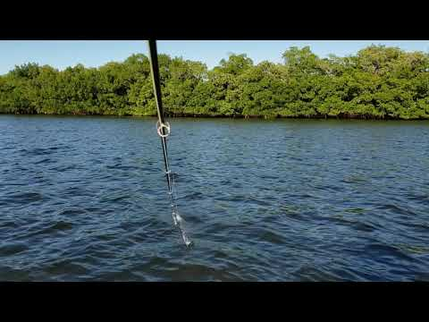 Tampa Bay Trout On The Fly With Fishing Tips