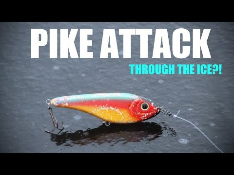 Pike Attacks Lure Through the Ice?! - UNBELIEVABLE
