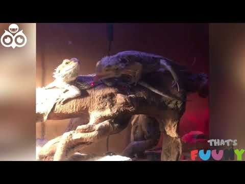 Confused Animals   Funny Animals Compilation   2020 Your Videos on VIRAL CHOP VIDEOS