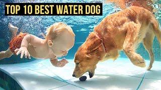 Top 10 Best Water Dog Breeds