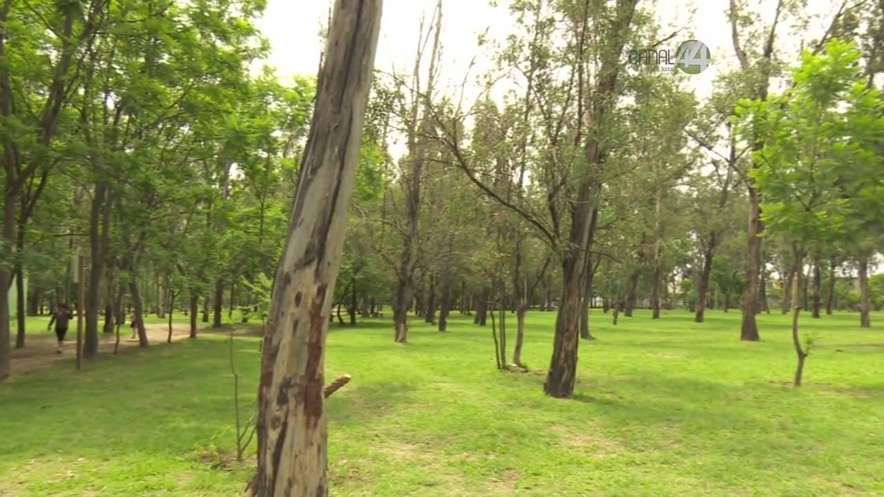 Señal Informativa: Reforestan el Bosque Centinela - YouTube