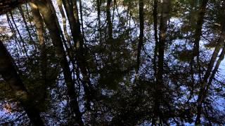 Moodmasters Woodmasters video content: Leuvense bos