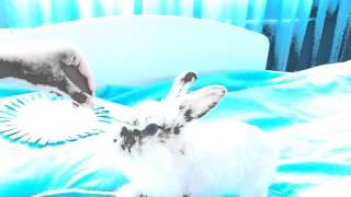 Дрессировка кролика