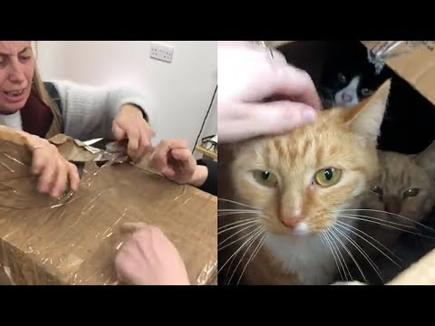 11 Cats Dumped in the Night...