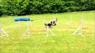 Echo Agility-Training 14 Months - Thomas Berger (2)