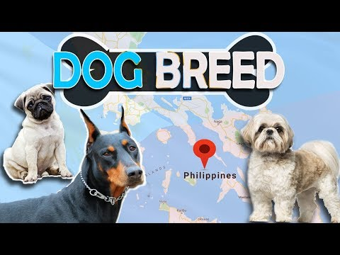 Top 10 Popular Breed Of Dogs In Philippines and Their Prices | Philnews