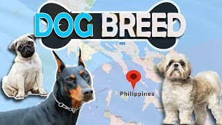 Top 10 Popular Breed Of Dogs In Philippines and Their Prices   Philnews