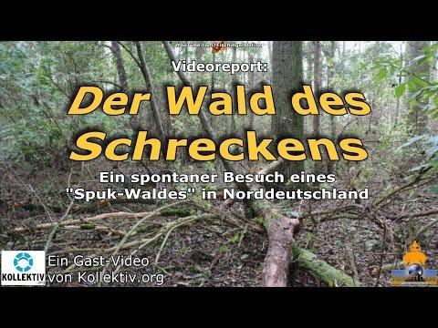 Der Wald des Schreckens: Ein Besuch in einem Spuk-Wald in Norddeutschland (Gast-Video)