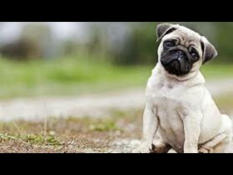 You & I in This Beautiful World || Vodafone (Pug) ads and Ringtone