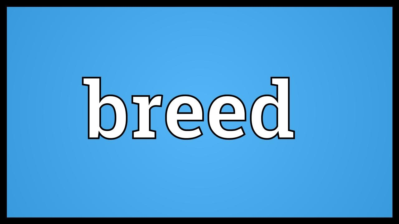 Breed is ... Meaning 95