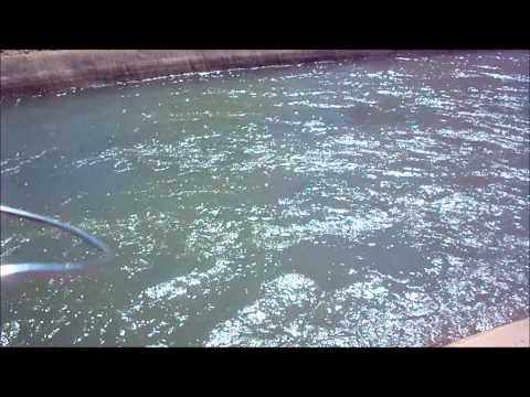 Fishing Adventures 8 (Phoenix Arizona Canal Fishing)