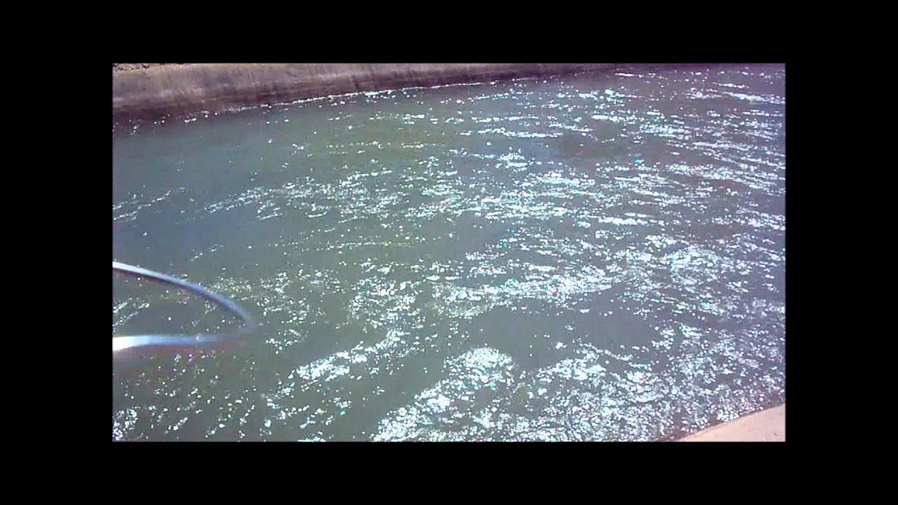 Fishing adventures 8 phoenix arizona canal fishing doovi for Fishing in phoenix arizona