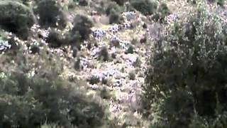 GOUROUNIA AGRIA KINIGI ΓΟΥΡΟΥΝΙ�...