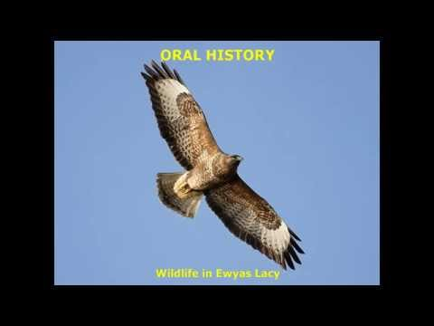 ELSG Audio Archive - Wildlife in Ewyas Lacy