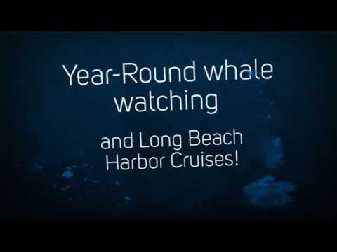 Harbor Breeze Yacht Charters and Cruises