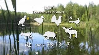 Охота в Тюменской области