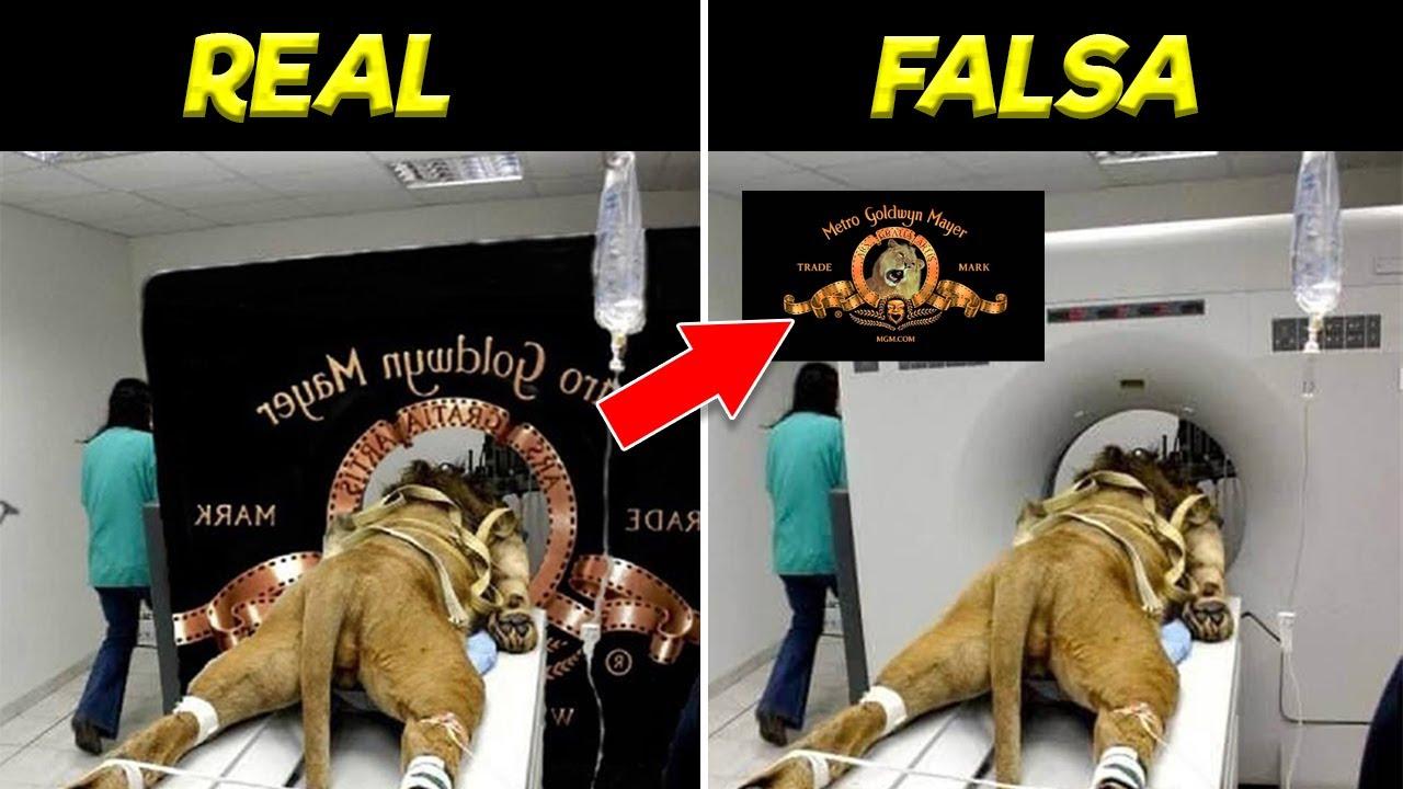 Imágenes VIRALES de Internet que son Totalmente FALSAS y No lo Sabías