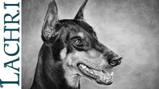 """Doberman portrait speed drawing and shading techniques """"time lapse"""" demonstration by Lachri"""