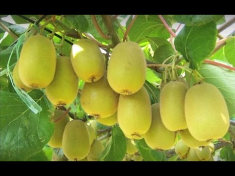 Growing edibles all year round. Sustainable Gardening Australia (SGA)