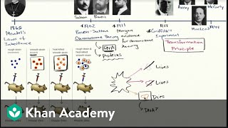 Establishing DNA as transformation principle