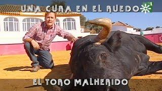 Toro malherido es intervenido por veterinario en una plaza  | Toros desde Andalucía