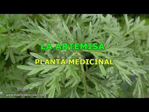 La Artemisa - Propiedades y Beneficios