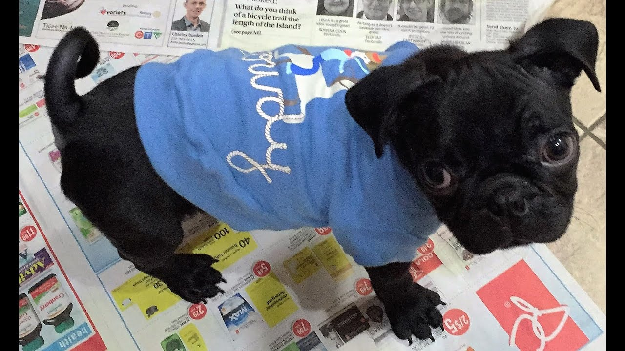 DIY shirt for puppies (how to make puppy shirt from a baby ...