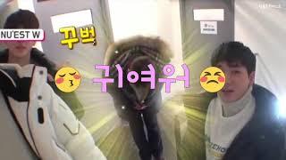 [백호] 동호의 귀여운 버릇 (feat.배꼽인사)