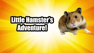 Little Hamster's Adventure!