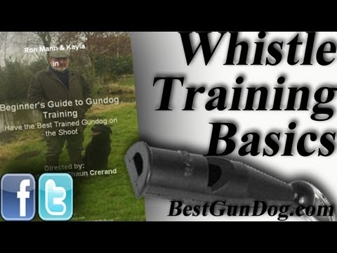hunting-dog-training-(whistle-training-basics)