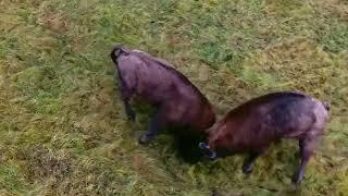 Уникальные кадры белорусской дикой природы, редкие птицы и животные   видео филь